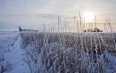 Frost kissed Iowa landscape (jmurphpix) Tags: road winter snow sunrise midwest ditch iowa blizzard prairiegrass ruralcountryside farmtog