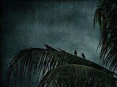 The birds (batabidd) Tags: blue sky bird texture birds manipulated thailand asia artistic digitalart creative surreal palm digitalpainting exotic tropical dreamy pajaro imaginary luismiranda memoriesbook graphicmaster batabidd digitalpaintingdreamysurrealimaginarybatabiddluismiranda