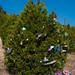 Trees_of_Loop_360_2014_041