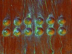 Abstract (maginoz1) Tags: summer abstract canon australia melbourne victoria dec 2014 g16