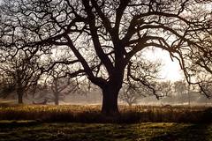 Winter Sun - Hanbury Hall (Macro light) Tags: trees winter worcestershire nationaltrust westmidlands winterlandscape droitwich hanbury wintersunshine hanburyhall backlittrees