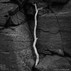 "Study of Bleached Driftwood, Monhegan Maine (24""x24"") (JMichaelSullivan) Tags: bw panorama monochrome square 100v island mono nikon maine badge dxo 200v monhegan 500v 300v 24x24 5f mjsfoto1956 400v monochromia 18x18 opticspro d7000 mpae piccure mjs2015"