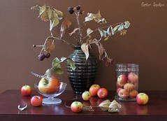 Quantity  Matters (Esther Spektor - Thanks for 7 millions views..) Tags: flowers autumn red stilllife food brown black color reflection green texture apple glass yellow fruit composition canon ceramic golden wooden leaf stem beige berry rust branch availablelight decay dry stilleben fantasy jar vase bouquet variety abundance tabletop bodegon naturemorte goblet artisticphotography naturamorta naturezamorta creativephotography estherspektor guantity