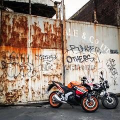 Date (Month, YYYY)-001.jpg (henderson231280) Tags: winter dog cold dogs honda scotland duck pointer bikes graffitti motorcycle yamaha spaniel suzuki lochlomond sv cbr luss r6 gladius ybr sfv650 sprointer