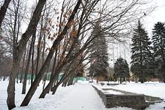 Arboretum (vldsil) Tags: winter nature arboretum ekaterinburg sunnyday