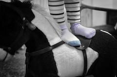 Pony Socks (RGNodak) Tags: horse goofy socks nikon sweet stripes pony rocking mismatch d7000 benchmonday