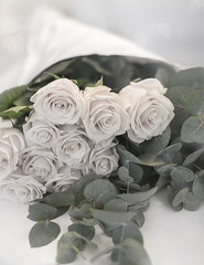 (Rebecca Watson Photography) Tags: flowers roses floral rose soft pale dreamy eucalyptus bouquet fragrance