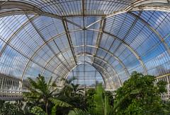 Inside the Palm House (markhortonphotography) Tags: kewgardens fern kew gardens banana surrey palm greenhouse tropical glasshouse palmhouse hothouse royalbotanicgardens 1844 thepalmhouse