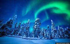 Northern Lights Over Forest (wallsfield) Tags: desktop winter wallpaper forest lights widescreen wide over free wallpapers northern