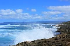 03102015_f4L007_ (ALOHA de HAWAII) Tags: hawaii oahu kaenapoint waialua roughocean