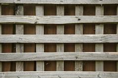 52 Week Challenge - Week 30 (Richard Amor Allan) Tags: trellis wood panel fence crossed grain knots dogwood52