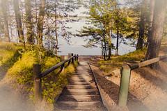To The Beach (Jori Samonen) Tags: trees sea plants water stairs finland boats helsinki steps railing vuosaari kallahdenniemi