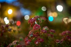 Under the Streetlights (Lens a Lot) Tags: paris | 2016 mamiyasekor 58mm 17 1974 10 blades iris m42 bokeh depth field color night public light rose green yellow orange blue red pink purple vintage manual japanese classic prime lens
