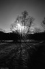 a walk in winter (McMac70) Tags: badvilbel blackandwhite film film135 kodakbw400cn nikonl35af2 schwarzweis