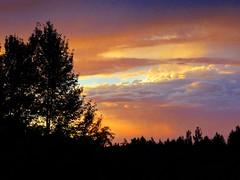 Last night's gorgeous sunset (peggyhr) Tags: blue trees sunset sky orange canada black clouds purple cream silhouettes alberta mauve thegalaxy peggyhr bluebirdestates thegalaxyhalloffame thelooklevel1red thelooklevel2yellow super~sixstage2silver niceasitgets~level1 niceasitgets~level2 windsong~ super~sixbronzestage1 30faves~