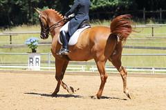 IMG_4617 (dreiwn) Tags: horse pony horseshow pferde pferd equestrian horseback reiten horseriding dressage reitturnier dressur reitsport dressyr dressuur ridingclub ridingarena pferdesport reitplatz reitverein dressurreiten dressurpferd dressurprfung tamronsp70200f28divcusd jugentturnier