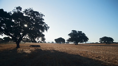 Paseos por el campo (jmlla93) Tags: campo lucena encinas color