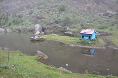 A delightful little island in the lake and a little blue hut (oldandsolo) Tags: kerala india godsowncountry vagamon vagamonhills idukkidistrict hillscenery nature photography takingpictures agriculture teacultivation teabushes teaestate teagarden pond lake scenic hut island islet duckfarm