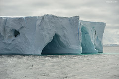 Iceberg Caves (naturalturn) Tags: ocean blue snow ice water antarctica southern cave iceberg southernocean strait bransfieldstrait bransfield tabulariceberg image:rating=5 image:id=193690