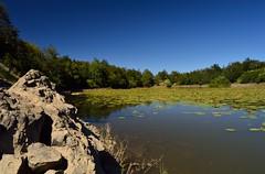 Lago Bino (mttdlp) Tags: lago landascape lake acqua appennino water d3200 trekking ninfee rocce blue polarized filter filtro polarizzatore cpl