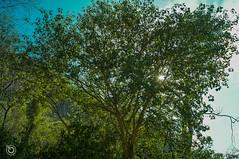 DSC03211 (Braulio Gmez) Tags: barrancadehuentitn biodiversidad caminoamascuala canyon canyonhuentitan faunayflora floresyplantas guadalajara jalisco mountainrange naturaleza sierra senderismo paisaje barrancadehuentitn barranca huentitn ixtlahuacandelro mxico guardianesdelabarranca
