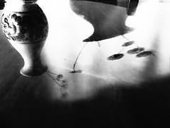 (hasmik.hakobyan) Tags: blowball dandelion flower mirror reflection shadow vase monochrome blackandwhite indoor