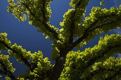 Jeune pousse (Jacques Isner) Tags: arbres vert pentax pentaxart pentaxflickraward pentaxsmc pentaxk1 nature