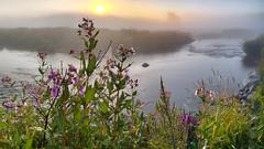 P8020016-54 pano2 -HDR-ICEv2-G-right (virgil martin) Tags: sunrise goldenhour landscape river mist morningmist wildflowers grandriver inverhaugh wellingtoncounty ontario canada olympusomdem5 panasoniclumix20mmf17 oloneo microsoftice gimp
