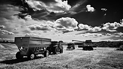 harvest(b/w) (BillsExplorations) Tags: harvest wheat oats soybeans tractor combine wagon grain midwest clouds sky blackandwhite monochrome agriculture farm farmmachinery