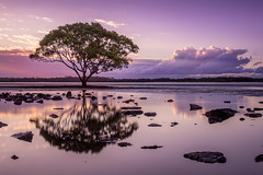 Mangrove tree (Pepyn Thysse) Tags: mangrove redcliffe queensland australia sunset dusk