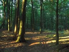 Trjmiejski Park Krajobrazowy - Gdask - Danzica - Danzig -  -  -  -  - Poland (altotemi) Tags: trjmiejski park krajobrazowy gdask danzica danzig     poland