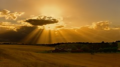 Mother Nature's gift (Marie.L.Manzor) Tags: 2016 france countryside meadow sun sunset landscape clouds nature sky field grass farm europe nikon nikon610 marielmanzor summer light sunrise image gettyimage 1000 1000favs 1000favorites
