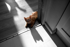Henry (Dom Walton) Tags: henry ginger cat kitten ears shadow selectivecolour domwalton