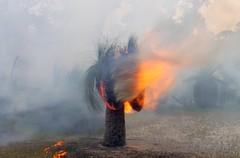 K52S5835cs (Ben D'Acunto) Tags: burnoff bushfires pentax pentaxk5iis
