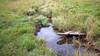 Wetlands (rotraud_71) Tags: moorland wetland autumn water grass reflections blinkagain vanagram simple