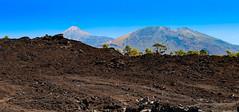 new green (werner boehm *) Tags: wernerboehm teide tenerife nature vulcano mountains vulklan