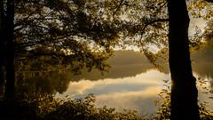 Autumn morning mood in the Saarland / Germany (Saarblitz) Tags: autumn morning saarland germany natur baum bume sonne nebel licht spiegelungen reflexionen farben stimmungsvoll atmosphre heiter outdoor pflanze himmel autumnmorningmoodinthesaarlandgermany