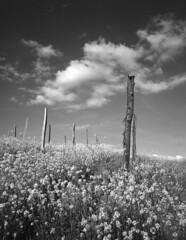 panorama segagliate 04 2016 (Roberto Gramignoli) Tags: pellicola paesaggio paesaggi segagliate piemonte prato prati campo campi blackandwite bw landscape