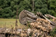 Holz (Sylsine) Tags: iserlohn menden smmern wlkesberg holz stamm sauerland