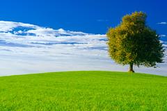 Facing the Sun (kostaskonkk) Tags: stallikon switzerland ch polarizer tree green sky clouds d5300 wallpaper manual focus
