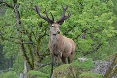 DSC_3991 (d90-fan) Tags: rauris raurisertal natur alpen salzburgerland sterreich nationalpark npht hohe tauern wandern krumltal seidlwinkeltal