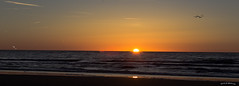 Australian Sunset (Shedraway Photos) Tags: goldensky sunset sky birds beach sandybeach waves clearsky glenelg australia canon6d shedraway