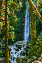 The Falls (Jean I Cresol) Tags: july 19th 2016 hdr waterfall falls forest trees outside exterior asia japan gifu yoro