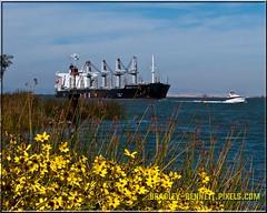 African Raven 1534 LR (bradleybennett) Tags: cargo vessel ship shipping delta water river ocean tanker antioch port stockton african raven africanraven