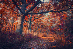 Technicolor (Anthonypresley1) Tags: nature landscape tree trees red vintage retro old anthony presley anthonypresley fantasy orange blue path illinois