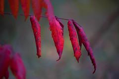 Poppin' (Beegmnphoto) Tags: red fusia purple orange plant tree outside outdoor minnesota minneapolis bloomington trail sony sonya7ii beercan minolta lens