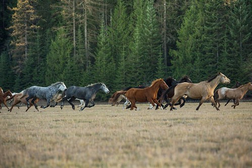 Live life like someone left the gate open!  #wpguestranch #duderanch #guestranch #ranchhorse #aqha #visitpnw #visitboise #visitidaho #idahoexplored #idahome #runninghorses #ranchhorses #ranchvacation #beautifuldestinations  Photo by @selkirkridgephotograp