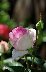 (jessjamesjo) Tags: flower close up