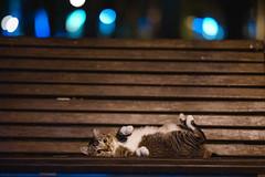 (Tridentz | ) Tags: cat neko cats meow night hongkong sony gm gm85 gmaster fe 85mm f14 bokeh animal eyes