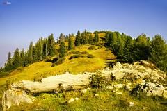 Mushkpuri 2 (AQAS.Clicks) Tags: landscape pakistan nature tracking nathiagali murree miranjani mushkpuri forest